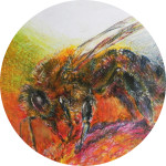 pszczoła2